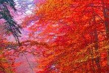podzim / podzím