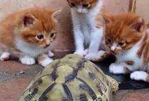 Love of animals / animali