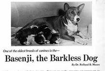 Binx the Basenji!  #DogShopping