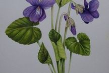 Arte Botanica / Arte Botanica