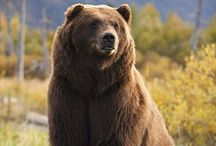 Unit 3 - Brown Like a Bear / Animals Unit  Colors and Shapes of Language