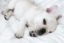 Pet Me, please!