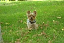 My dog Bruna