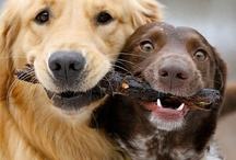 Doggy Stuff / by Leanne C