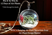 12 Days of Air Plants / Holiday Gift Ideas from Air Plant Design Studio. Pin to Win an Air Plant Terrarium! / by Air Plant Design Studio