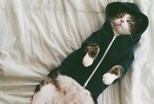 KittiesBeFunny / by Jana Pakalna