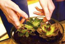 Растения и садики / Plants, gardens and everything in between
