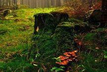 Природа / Nature