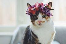 Flowers & Furbabies / Cats, dogs & flowers