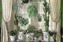 Balcones,Plantas,Terrazas... /  Verde que te quiero verde...