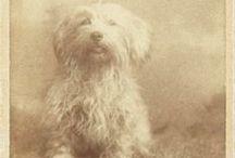 Vintage Dogs / Perritos de otra época