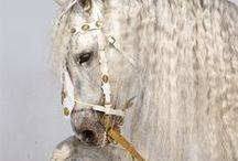 Horse Photos!!