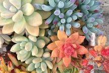 Suculentas, terrários e orquídeas