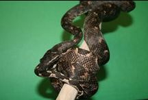 Incredible Reptiles / Amazing Reptiles available for purchase! Bring nature into your home!