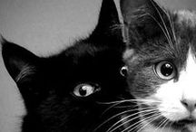 Cats :) / Pictures of cats.There is nothing sexier than their green eyes. :)