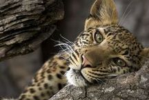 Beauty in the Wild / by Hiro's
