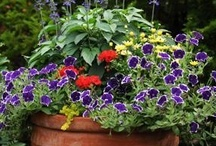 Container Gardening / by Emily Reece