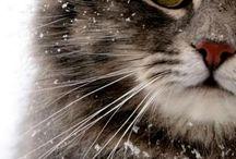 + Let it snow +