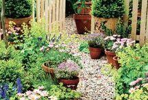 gardens / cottage gardens and wild flowers