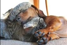 """Dogs sleeping with cats! Mass hysteria!"" / What is more heartwarming than dogs and cats in brotherly love? :) / by Courtenay Hoffman"