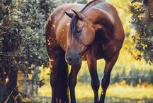 horses:))