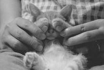 Animals§