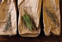 Αρωματικά / Θεραπευτικά Φυτά