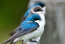 Bird Watching / by Pat Thompson