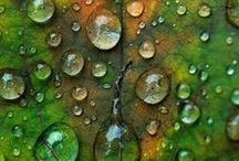 Nature's Palette / The wonderful textures and colours of nature's offerings.  I am inspired ......