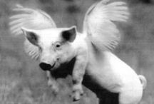 Pig / Just pigs