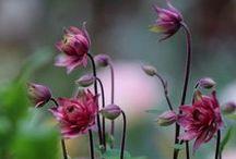 Vaste planten | Siergrassen / Vaste planten en siergrassen komen ieder jaar trouw terug in het voorjaar. Zij vormen de basis voor bloemrijke borders.