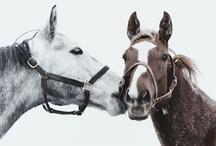 """Nolte ♥ Pferde / Die Nolte Familie begeistert sich für den Reitsport und ist dort selbst aktiv. Noltes Küchengirl wohnt seit 2004 im Stahl von Weltklasse-Springreiter Marcus Ehning. Damit """"Küche"""", wie er seine Stute liebevoll nennt, dort bleiben konnte, sprangen die Noltes als Sponsor ein. Immer, wenn die beiden unterwegs sind, fiebern alle mit. Bis heute gibt es viele Erfolge zu bejubeln. Auf diesem Board möchten wir unser Herz für Pferde ausdrücken ♥"""
