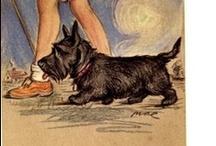 Dunya / scottisch terrier