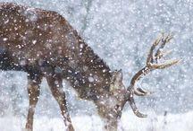 Winter wonderland / Hiver blanc et féérique