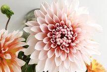 Botanicals / Vibrant and inspiring florals