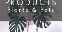 PRODUCTS | Plants & Planterpots / Plants & Vegetation Collection    #inCollective www.incollective.co Your personal interior designer