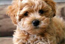 Pupper