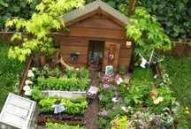 Gardening and Outdoors / by Turbo Mom
