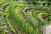 Garden elements: Kitchen Garden / Köksträdgård. Don't miss my other garden boards. / by Naturator landskapsarkitektur och trädgård