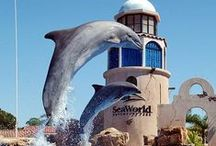 SeaWorld Orlando / SeaWorld Orlando delivers an astounding array of immersive experiences as you make wondrous connections with the sea. With all the shows, dining, and attractions SeaWorld has to offer, you are sure to have an experience to remember. Get your discount Sea World tickets at https://tickets2you.com/