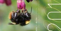 Wildbienen Kalender 2016 / Wildbienen Kalender 2016, Wildbiene, Bienen Schutz, Bienenportrait, Mauerbiene, Hummel, Wildbienen helfen, Blühkalender, Pollengehalt, Nektargehalt, Pollen, Nektar, Bienennahrung