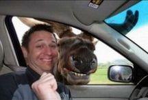Epic Animal photobombs