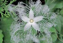 Fiori  ( Flowers )
