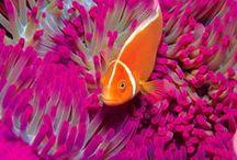 Oceanos e animais marinhos