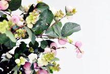 . : FLOWERS & PLANTS : .