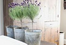 """Plain & Simple Farmhouse Style / I call my style of farmhouse decorating """"plain & simple"""". It's the way I remember the old farmhouses here in the Delta. I love collecting inspiration from others that speak """"farmhouse"""" to me!"""