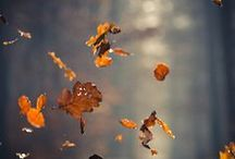 """autumn love / """"Fall has always been my favorite season. The time when everything bursts with its last beauty, as if nature had been saving up all year for the grand finale."""" <3"""