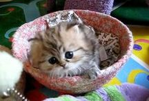 ♥ Animal Gifs ♥ / Funny Animals / by Animals are Bliss