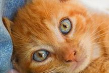 ♥ Cute Cats & Kittens ♥ / Cats & Kittens / by Animals are Bliss