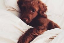 Cute / OMG sooooooo cute!